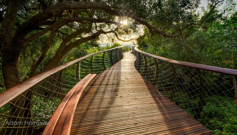 unusual-beautiful-tree-canopy-walkway-design (10)