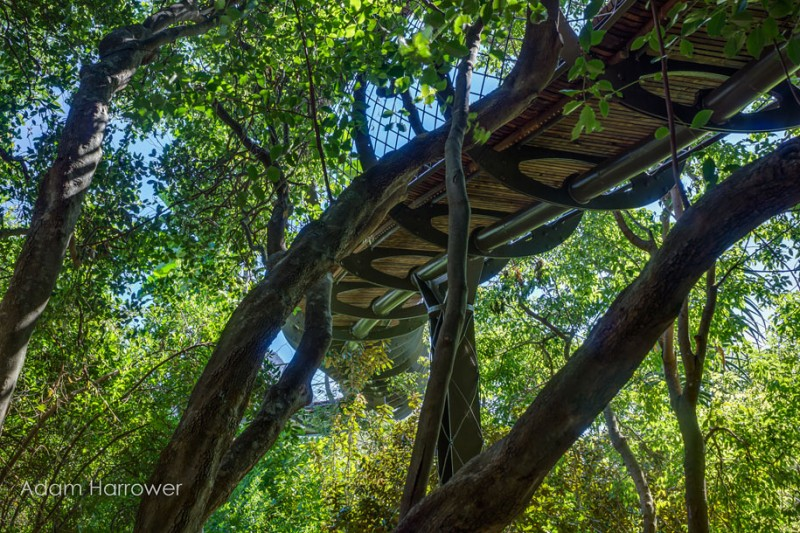 unusual-beautiful-tree-canopy-walkway-design (2)