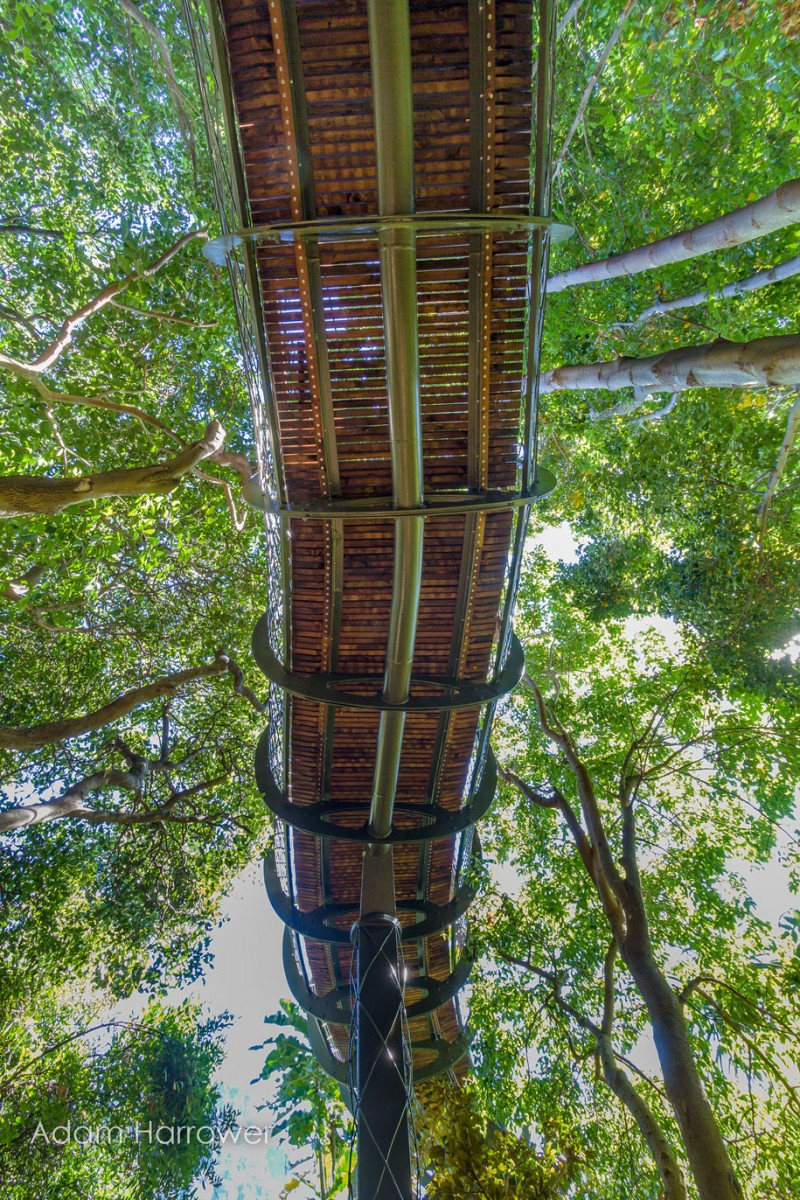 unusual-beautiful-tree-canopy-walkway-design (3)