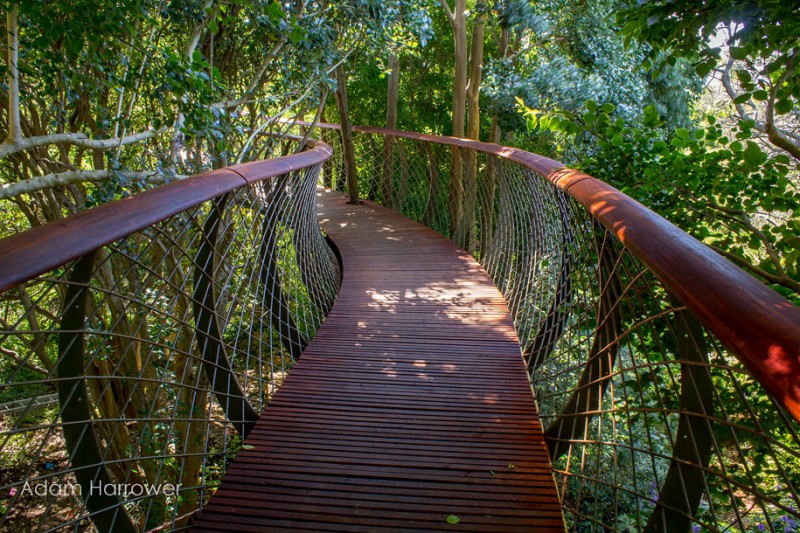 unusual-beautiful-tree-canopy-walkway-design (4)