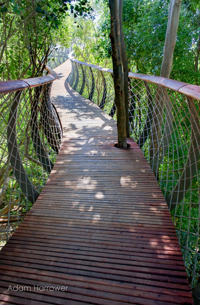unusual-beautiful-tree-canopy-walkway-design (5)