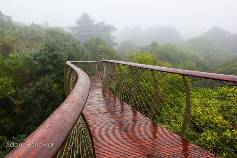 unusual-beautiful-tree-canopy-walkway-design (7)