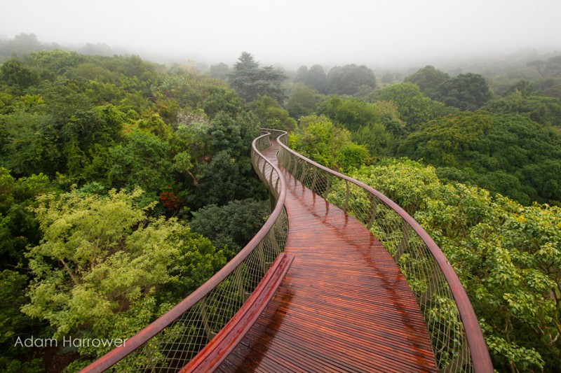 unusual-beautiful-tree-canopy-walkway-design (8)