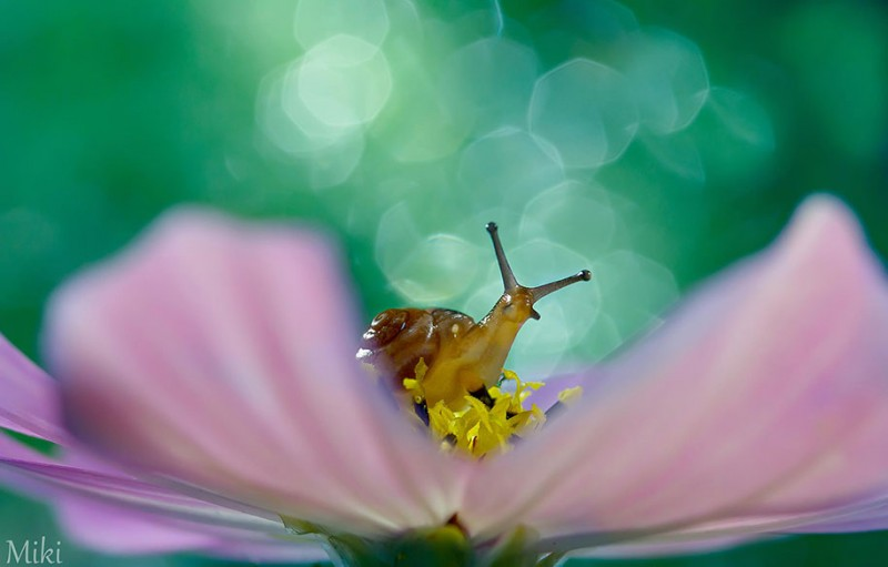 beautiful-pictures-of-macro-photography-nature (12)