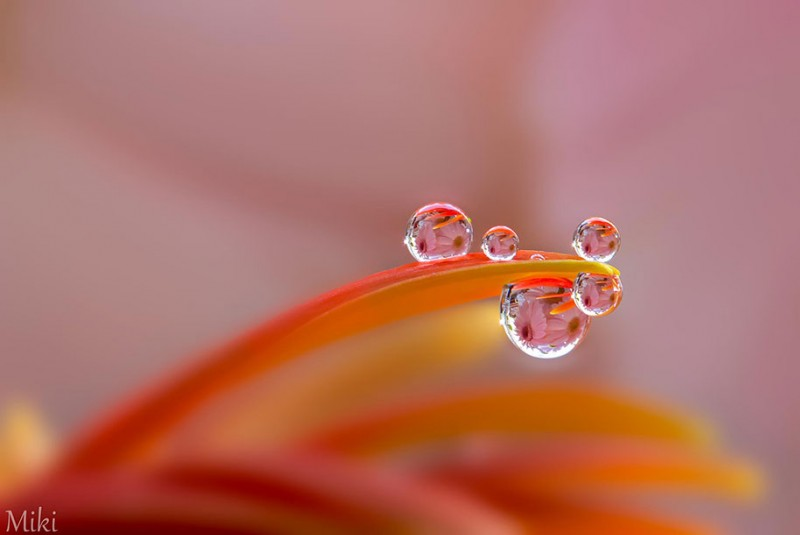 beautiful-pictures-of-macro-photography-nature (15)