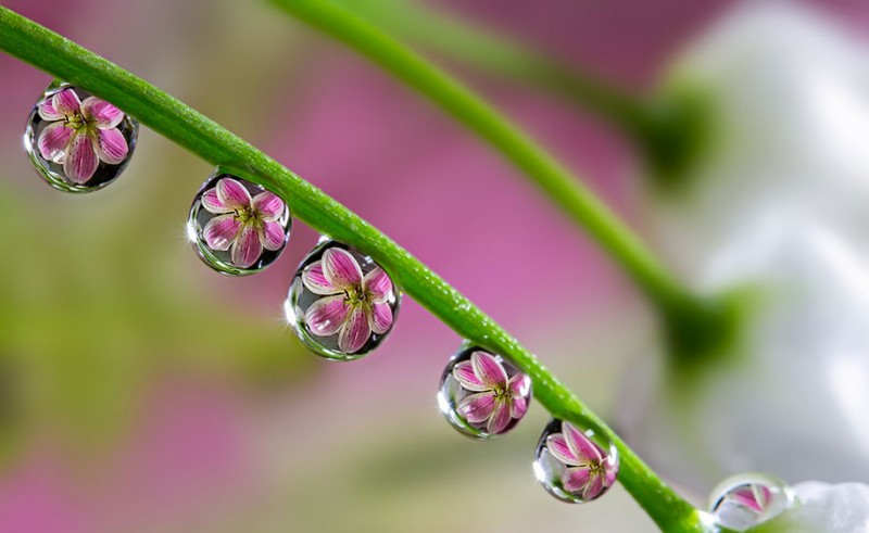 beautiful-pictures-of-macro-photography-nature (3)