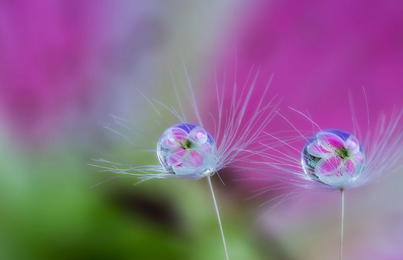 beautiful-pictures-of-macro-photography-nature (5)