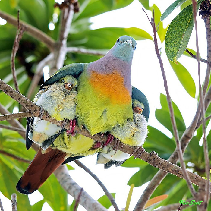 funny-cute-bird-parents-babies-photos (1)
