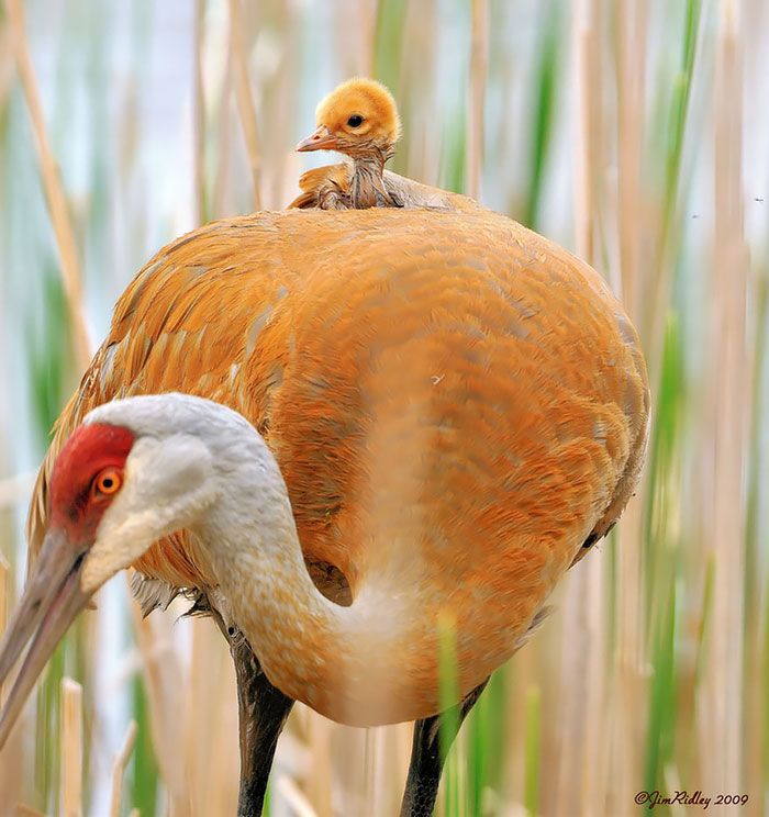 funny-cute-bird-parents-babies-photos (5)