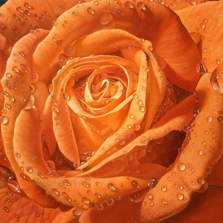 hyperrealism-art-Giant-Paintings-of-Roses-Dewdrops (3)