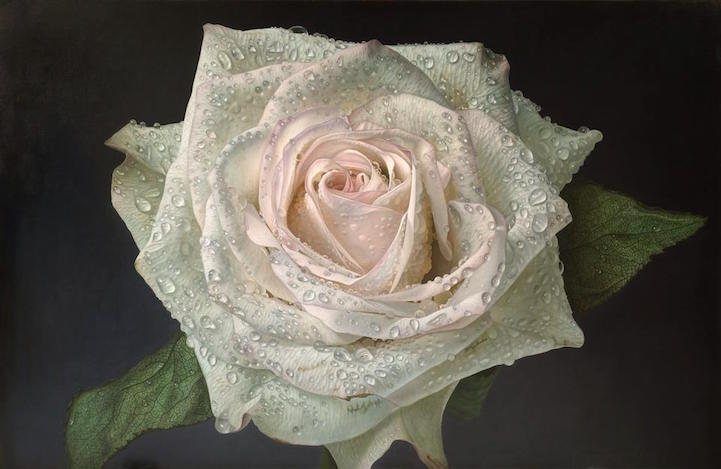 hyperrealism-art-Giant-Paintings-of-Roses-Dewdrops (6)
