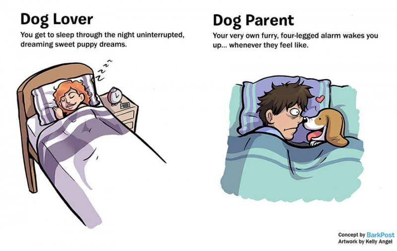 interesting-comics-dog-lover-vs-parent-illustration (4)