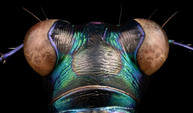 macro-insect-photography-microscope-lens-photos-perfect-detail (11)