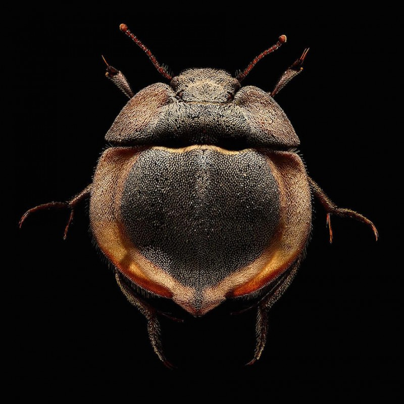 Macro Insect Images Made Of Thousands Of Separate Photos