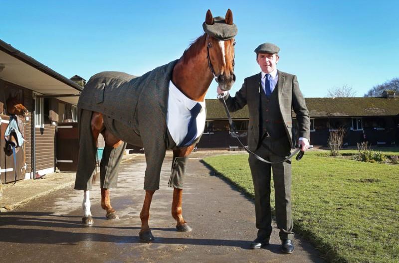 race-veteran-Morestead-horse-clothing-design-suit (1)