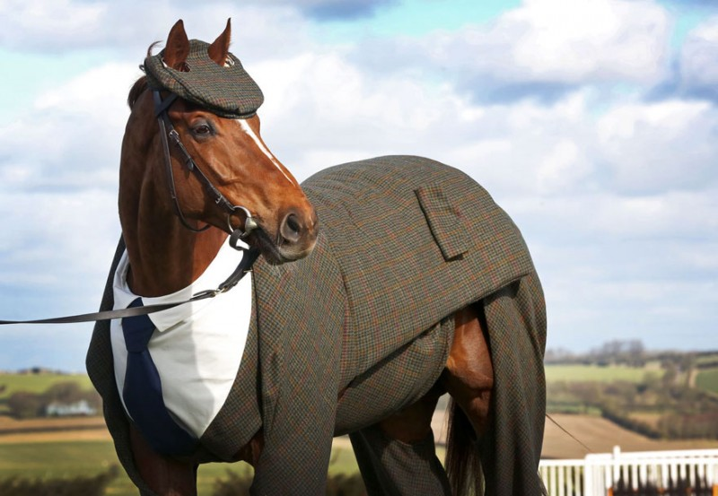 race-veteran-Morestead-horse-clothing-design-suit (2)