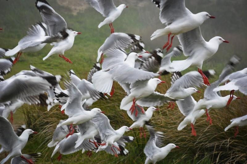 wonderful-beuatiful-New-Zealand-South-Island-landscape-photos (1)