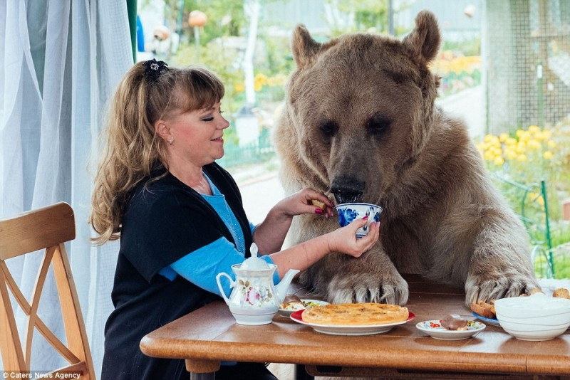 adorable-domestic-bear-russia-family-pet (1)