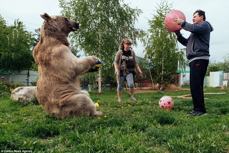 adorable-domestic-bear-russia-family-pet (10)