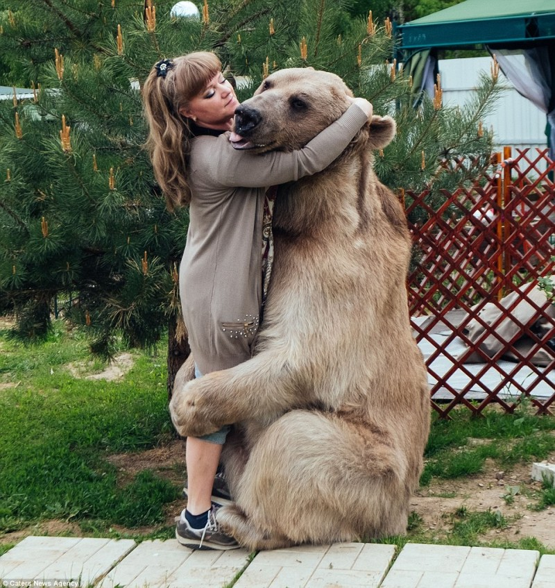 adorable-domestic-bear-russia-family-pet (11)