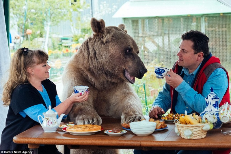adorable-domestic-bear-russia-family-pet (4)