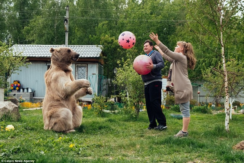 adorable-domestic-bear-russia-family-pet (5)