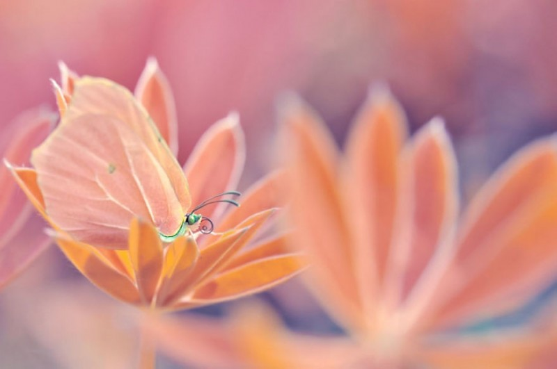 beautiful-close-up-nature-flower-insect-photographs (2)