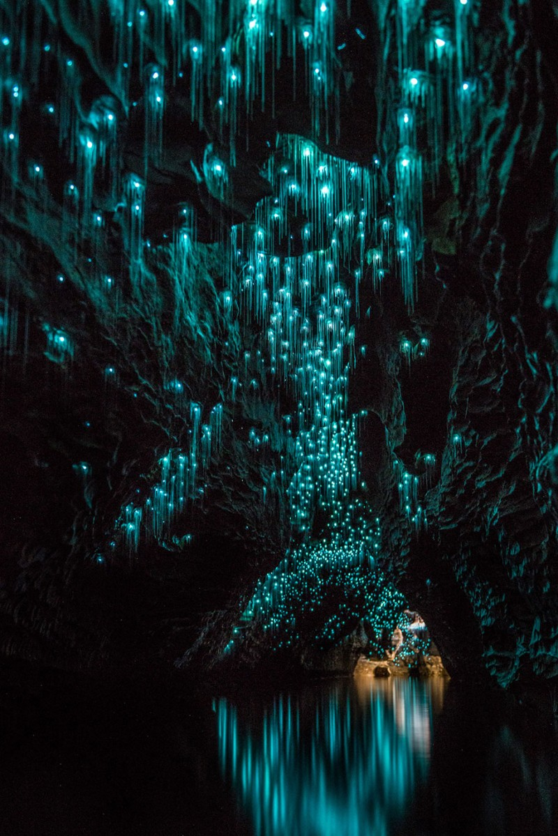 beautiful-pictures-glow-worms-limestone-caves-new-zealand (3)