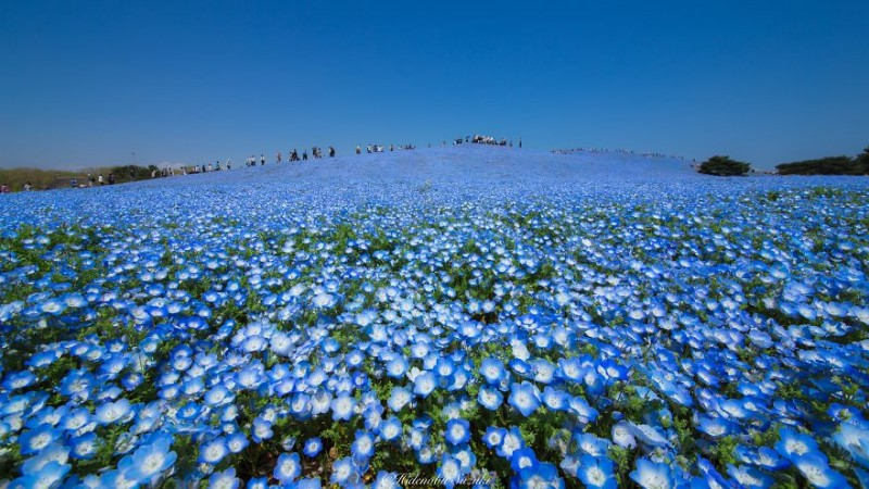 beautiful-spring-japan-flower-landscape-photos (1)