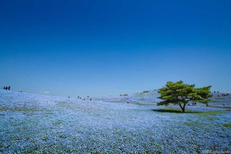 beautiful-spring-japan-flower-landscape-photos (2)