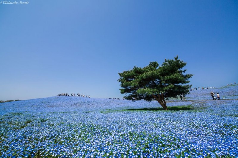 beautiful-spring-japan-flower-landscape-photos (3)