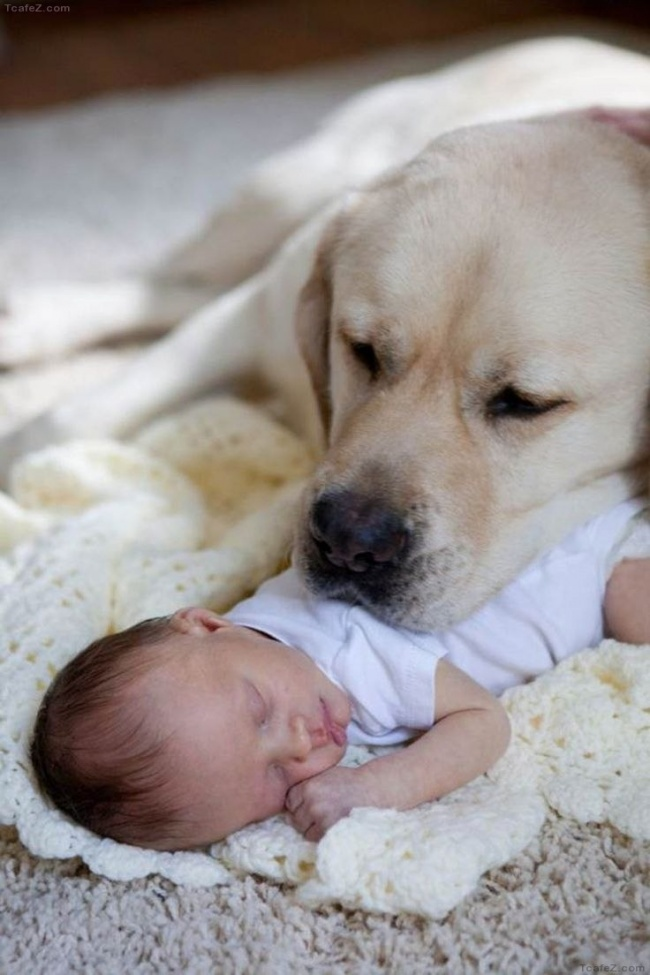 cute-adorable-photos-kids-animals-pets (24)
