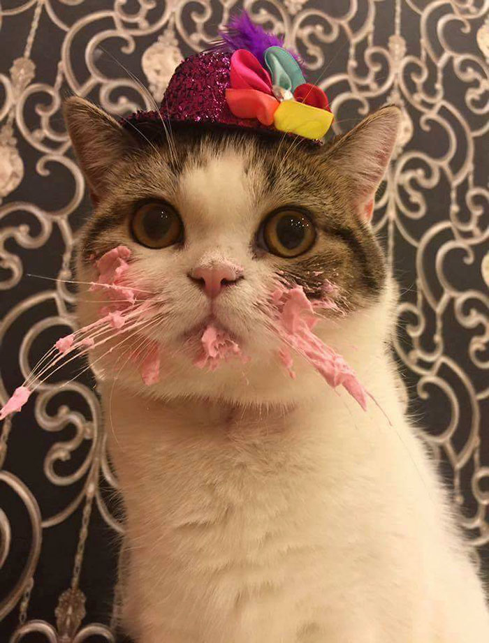 funny-photos-adorable-cat-eats-cake (1)