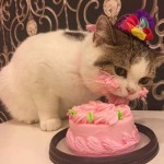 Funny pictures of a cat eating a cake on his birthday