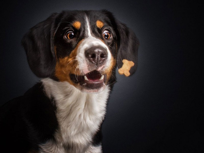 Funny expressions on hungry dogs' faces as they try to ...