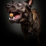 Funny expressions on hungry dogs' faces as they try to catch treats