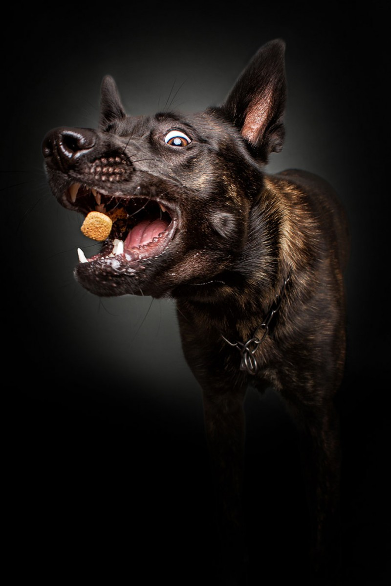 funny-pictures-of-dogs-catching-food-photos (4)