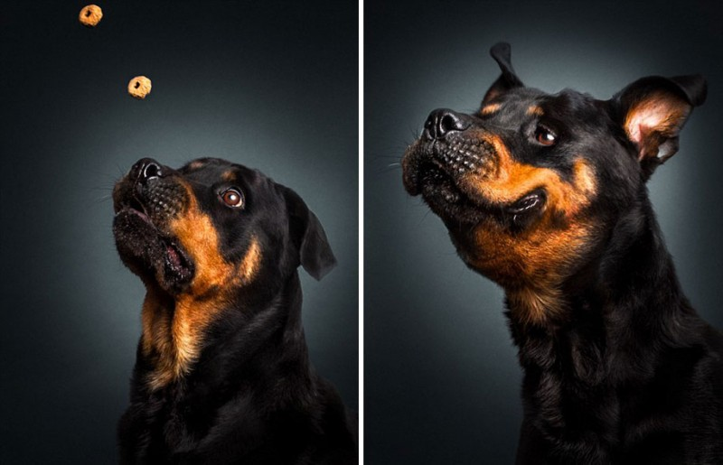 funny-pictures-of-dogs-catching-food-photos (7)