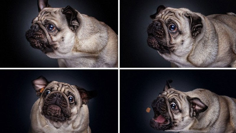 funny-pictures-of-dogs-catching-food-photos (9)