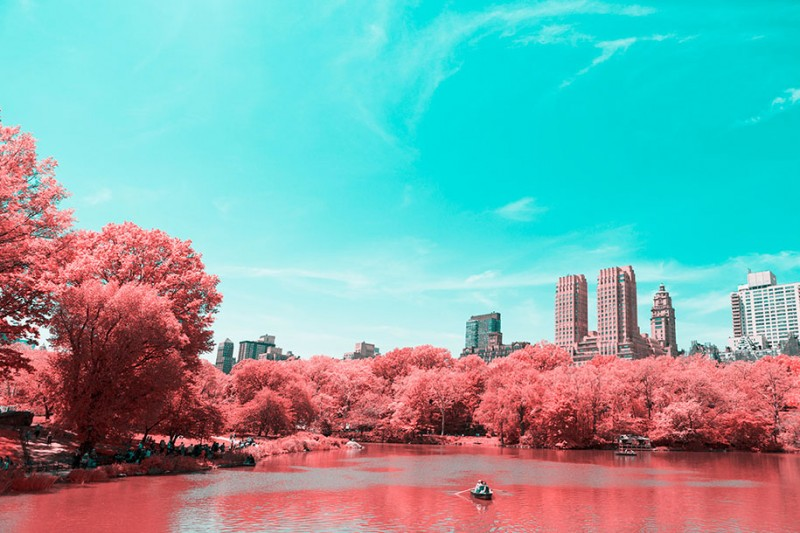 infrared-photography-pink-colored-new-york-central-park (1)