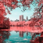 New perspective on New York's central park by using infrared-aerochrome film