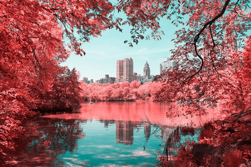 infrared-photography-pink-colored-new-york-central-park (2)