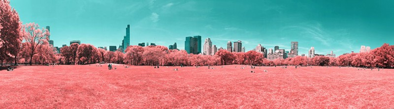 infrared-photography-pink-colored-new-york-central-park (3)