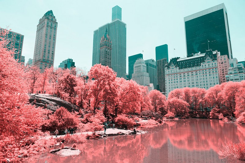 infrared-photography-pink-colored-new-york-central-park (4)