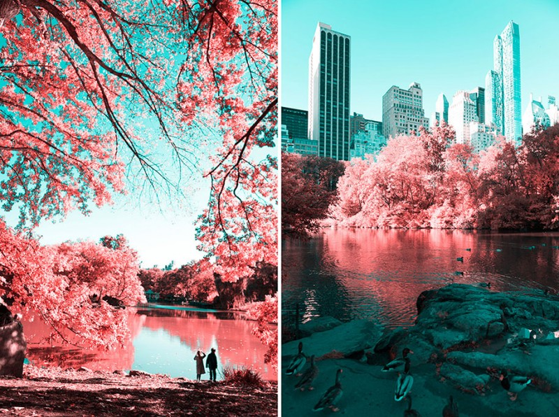 infrared-photography-pink-colored-new-york-central-park (5)