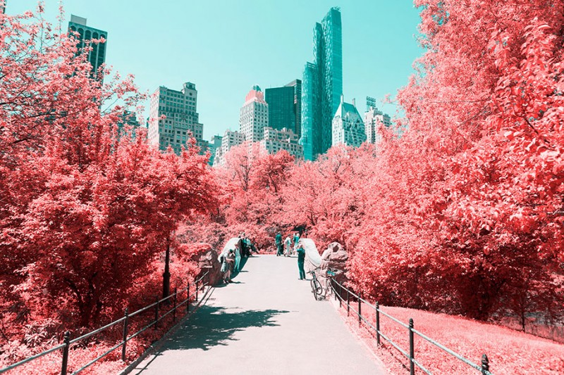 infrared-photography-pink-colored-new-york-central-park (6)
