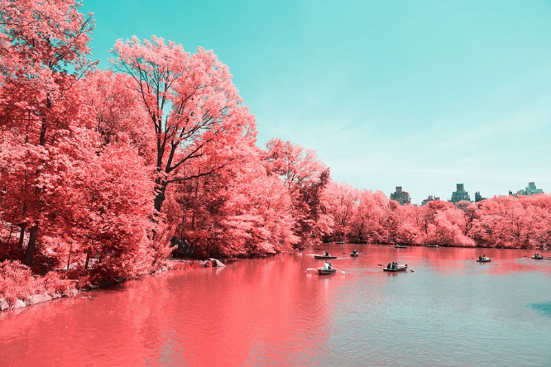 infrared-photography-pink-colored-new-york-central-park (7)