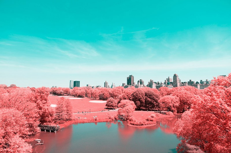 infrared-photography-pink-colored-new-york-central-park (8)