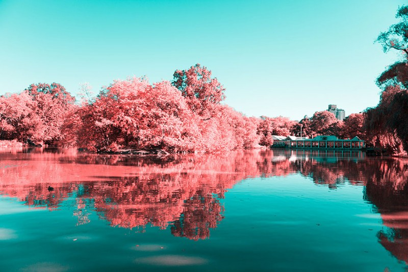 infrared-photography-pink-colored-new-york-central-park (9)