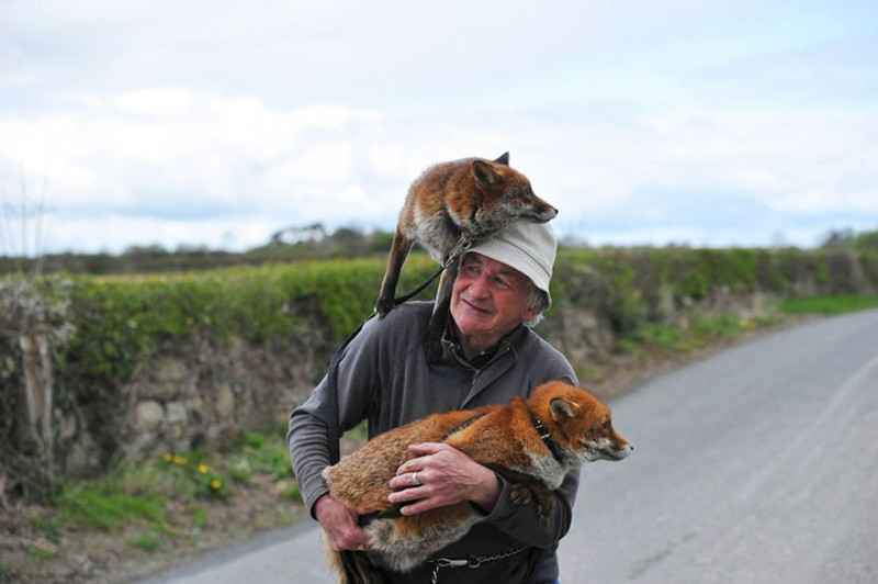 pet-foxes-rescue-relationship-between-human-animals (1)